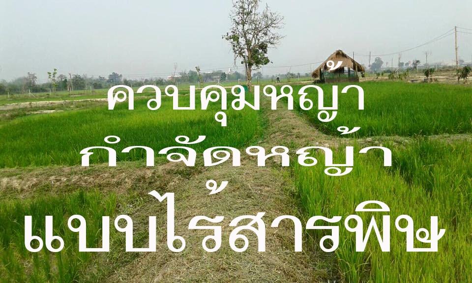 ยาฆ่าหญ้าปลอดสารพิษ ทำเอง